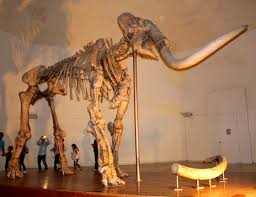 Esqueleto de mamute