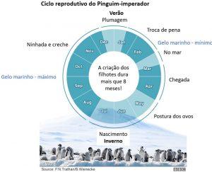 Ciclo-de-vida-Pinguim-Imperado