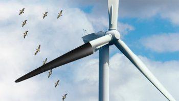 black blade turbine birds